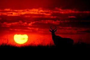 Choáng ngợp vẻ đẹp động vật hoang dã dưới ánh hoàng hôn
