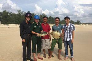 Quảng Trị: Cứu 2 cá thể rùa biển mắc lưới ngư dân