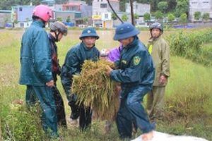 Mưa lớn gây thiệt hại tại một số địa phương