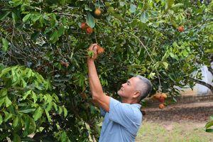Lâm Sơn mùa trái ngọt