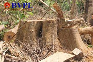 Để rừng 'đổ máu', hai cán bộ kiểm lâm bị khởi tố, bắt tạm giam