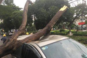 Mưa lớn làm cây bật gốc đè bẹp ô tô ở quận 11