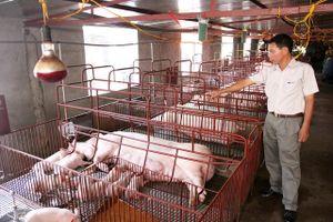 Kiểm soát dịch bệnh cho vật nuôi thời điểm giao mùa