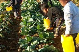 Mùa khô, mang nước về với 'Trường Sa cạn'
