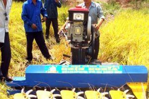 Trồng lúa công nghệ cao, nhà nông Long An lãi cao hơn 3 triệu/ha