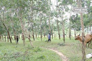 Nhức nhối tranh chấp đất rừng