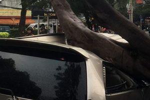 Cây xanh bật gốc trong cơn mưa đè bẹp dúm ô tô 7 chỗ, nhiều người thoát chết