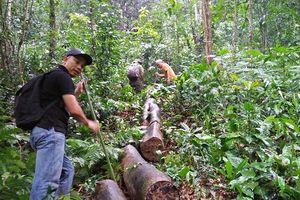 Thừa Thiên - Huế: Lâm tặc 'xẻ thịt' tan hoang rừng phòng hộ Phú Lộc