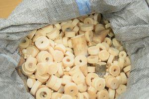 Hà Nội: Bắt giữ gần 1 tấn ngà voi và vẩy tê tê 'lậu'