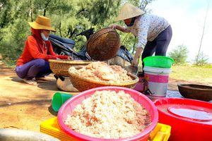 Ngư dân Quảng Trị trúng mùa ruốc biển