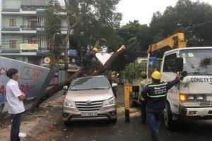 TPHCM: Cây xanh đổ đè trúng ôtô, nhiều người hốt hoảng bỏ chạy