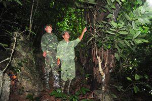 Tuyên Quang: Chuyện về người tuần rừng cao tuổi ở Lũng Vai
