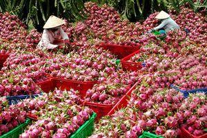 Ký biên bản ghi nhớ về quảng bá, tiêu thụ thanh long Bình Thuận ở Ấn Độ