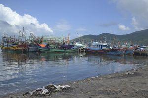 Trở lại câu chuyện âu thuyền cảng cá Thọ Quang