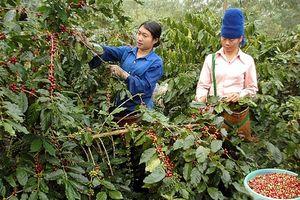 Định vị thương hiệu cho cà phê Sơn La