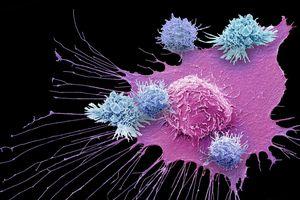 Liệu pháp miễn dịch trị ung thư vừa đoạt giải Nobel Y học, có phát hiện đột phá thế nào?