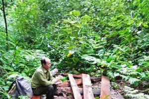 TT- Huế: Đình chỉ 2 trạm trưởng để làm rõ vụ phá rừng