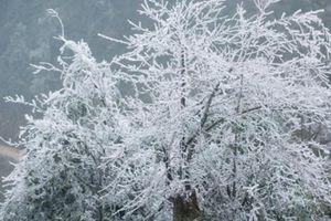 Mùa đông 2018 đến sớm, nhiệt độ lạnh kỷ lục và có tuyết rơi?