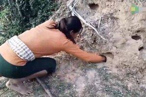 Tưởng kho báu, người phụ nữ đào xuống, phát hiện đáng sợ