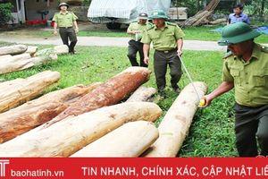 9 tháng, 206 vụ vi phạm pháp luật về bảo vệ, phát triển rừng