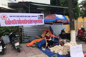 Tỏi rớt giá, nguy cơ đổ bỏ hàng trăm tấn tại Khánh Hòa