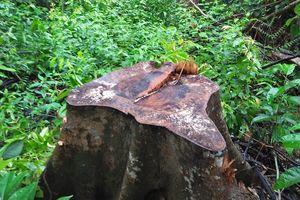 Đình chỉ công tác 2 trạm trưởng quản lý bảo vệ rừng