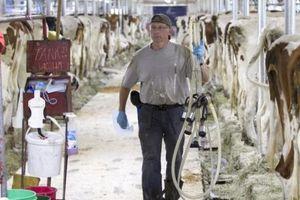 USMCA sẽ tác động đến ngành sữa của Canada