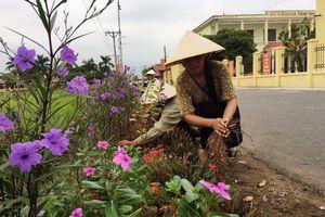 Hải Phòng: Tuyến đường hoa làm đẹp cảnh quan, môi trường khu dân cư