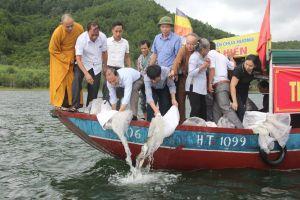 Hà Tĩnh: Phóng sinh 1 tấn cá về môi trường tự nhiên