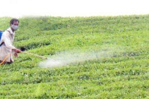 Áp dụng công nghệ sinh thái: Vừa đẹp ruộng vườn, lại tăng thu nhập