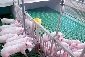 Không áp dụng công nghệ 4.0, chăn nuôi sẽ gặp khó