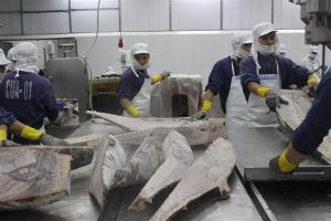 Doanh nghiệp thủy sản bất ngờ với quy định kiểm tra chuyên ngành