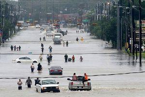 Nỗ lực cứu các thành phố đang chìm dần trong nước biển