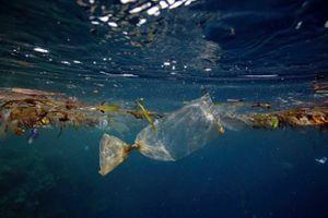 Chai nhựa tự hủy trong nước – hướng đi mới chống ô nhiễm đại dương