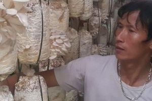 Ninh Bình: Trồng nấm bào ngư mỗi năm kiếm hàng trăm triệu đồng