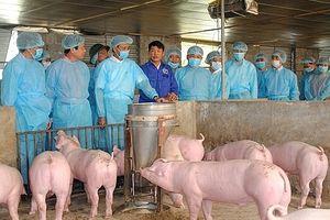 Hà Nội thành lập 2 đoàn kiểm tra ứng phó đối với bệnh dịch tả lợn châu Phi xâm nhiễm