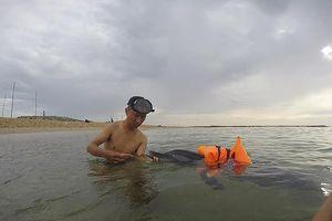 Biệt đội cứu hộ cá heo