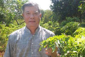 Đồng Nai: Thu nhập cao từ cây đinh lăng