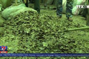 Bắt giữ số lượng lớn ngà voi và vảy tê tê nhập lậu tại Cảng Tiên Sa, Đà Nẵng