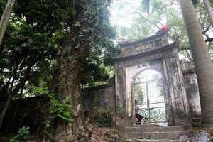 Đề nghị bán đấu giá công khai cây sưa 100 tỷ đồng ở Hà Nội