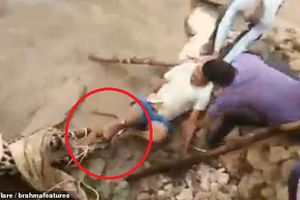 Clip: Báo đốm bị thương chồm lên cắn người khi được giải cứu