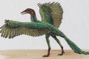 Top sinh vật ẩn chứa bí ẩn hấp dẫn nhất thời tiền sử