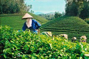 Cần đẩy mạnh lộ trình cổ phần hóa doanh nghiệp nông nghiệp