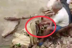 Báo đốm bị thương chồm lên cắn người khi đang được giải cứu