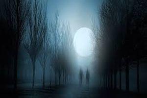 Bí ẩn khả năng nhìn thấy 'hồn ma' của động vật