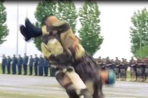Đặc nhiệm Nga diễn võ, lộ nhiều đòn thế giống Vovinam