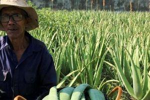 Làm giàu ở nông thôn: Dân ở đây đổi đời nhờ cây 'ưa nắng, ngại mưa'