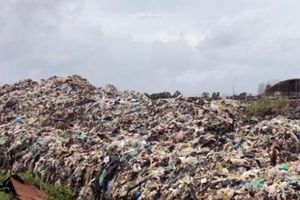 Cà Mau: Không chấp nhận xây dựng bãi rác tạm trong rừng phòng hộ