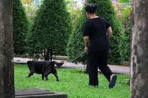TP.HCM: Xử lý nghiêm việc thả rông chó trên phố đi bộ Nguyễn Huệ