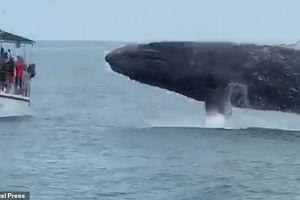 Clip: Cá voi tung mình khỏi mặt nước ngay trước mắt khách du lịch